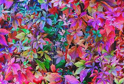 Autumn Virginia Creeper Art Print by Diane Alexander