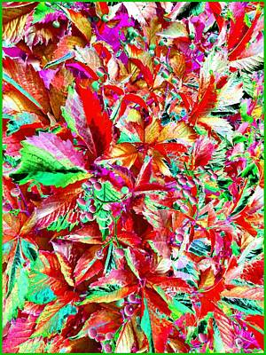 Digital Art - Autumn Virginia Creeper by Will Borden