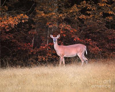 Photograph - Autumn Visitor by Jai Johnson