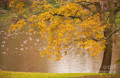 Photograph - Autumn Visitors by Rima Biswas