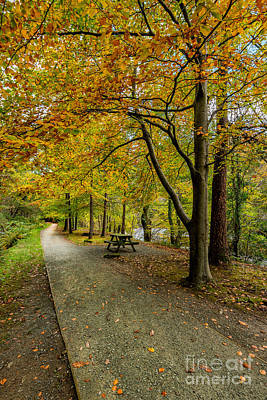 Golden Digital Art - Autumn Walk by Adrian Evans