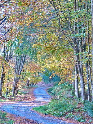 Photograph - Autumn Walk by Debra Collins
