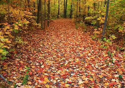 Autumn Walk In Ohio Art Print by Dan Sproul
