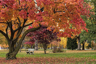 Photograph - Autumn Walk In The Park by Gene Walls
