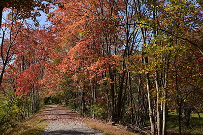 Andover Photograph - Autumn Walk In The Woods by Deborah Bifulco
