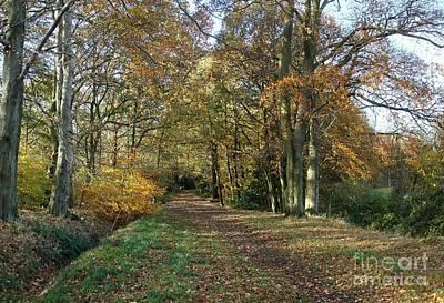 Autumn Walk Original