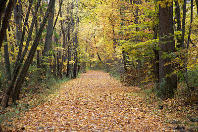 Autumn Walk Art Print by John Crothers
