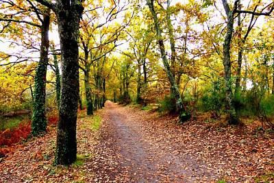 Nature Photograph - Autumn Walk by Bishopston Fine Art