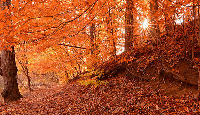 Reds Of Autumn Photograph - Autumn Walk by Lourry Legarde