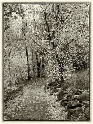 Photograph - Autumn Walk - Sepia Tone by Harold Rau