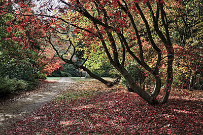 Photograph - Autumn Walk by Shirley Mitchell