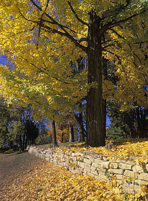 Photograph - Autumn Wall - Fm000082 by Daniel Dempster