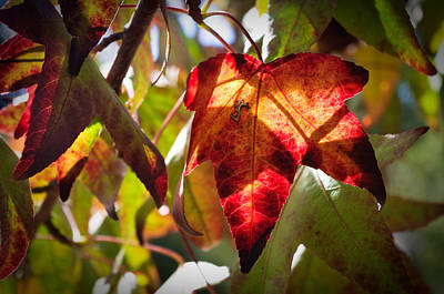 Photograph - Autumn Warmth by Adria Trail