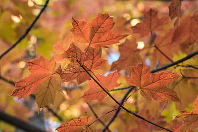 Photograph - Autumn Warmth by Bill Pevlor