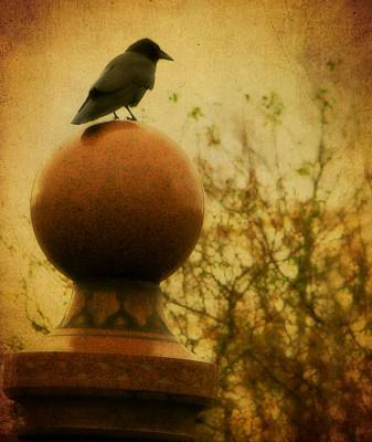 Birds In Graveyard Photograph - Autumn Wash by Gothicrow Images