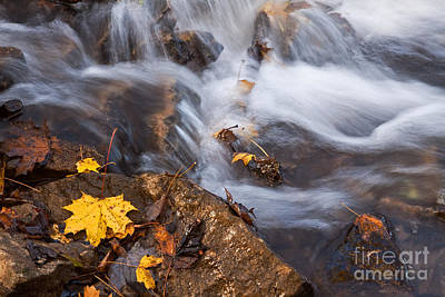 Photograph - Autumn Water by Charline Xia