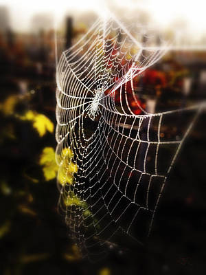 Photograph - Autumn Web by John Monteath