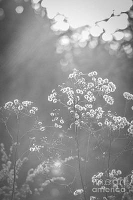 Photograph - Autumn Weeds by Cheryl Baxter