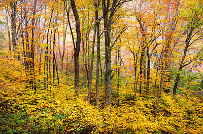 Outdoors Photograph - Autumn Western Nc Fall Foliage - Forest For The Trees by Dave Allen