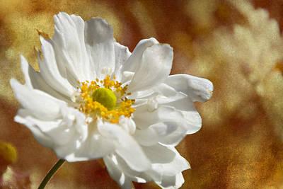 Photograph - Autumn White Flower by Walter Herrit
