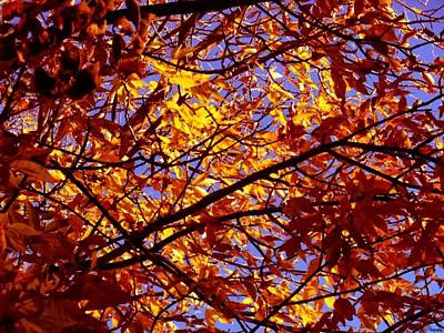 Photograph - Reduced Autumn by Wild Thing