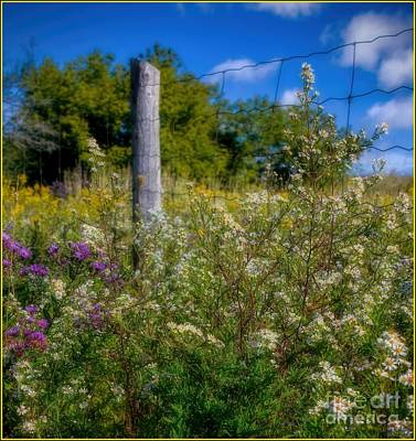 A Summer Evening Photograph - Autumn Wildflowers - Asters by Henry Kowalski