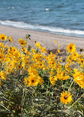 Photograph - Autumn Wildflowers At The Beach by Barbara McMahon