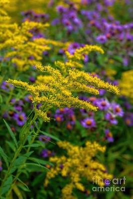 A Summer Evening Photograph - Autumn-wildflowers-goldenrod by Henry Kowalski