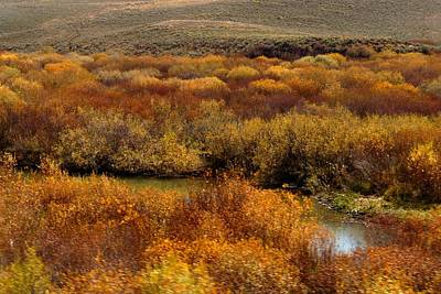 Photograph - Autumn Willows Along A Mountain Stream by Marilyn Burton
