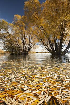 Willow Lake Photograph - Autumn Willows Lake Tekapo New Zealand by Colin Monteath