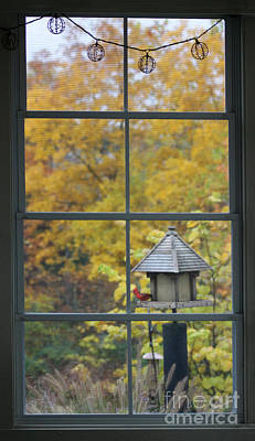 Photograph - Autumn Window With Cardinal by Karen Adams