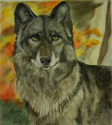Drawing - Autumn Wolf by Joan Pye