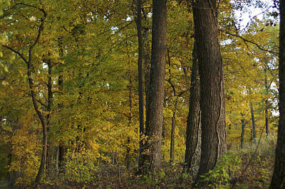 Photograph - Autumn Wood by Jane Eleanor Nicholas