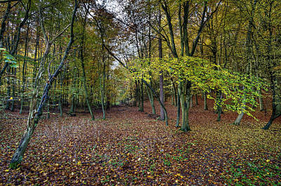 Photograph - Autumn Woodland by Gary Eason