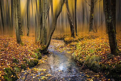 Autumn Woodland Art Print by Ian Hufton