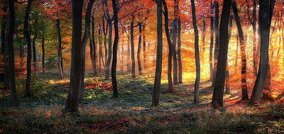 Autumn Woodland Sunrise Art Print by Photokes