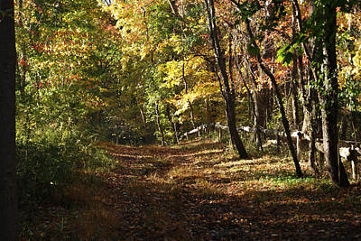 Photograph - Autumn Woods by Margie Avellino