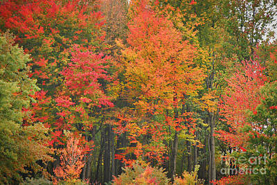 Autumn Woods Art Print by Mary Carol Story