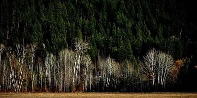 Photograph - Autumn Woods by Michael Dohnalek