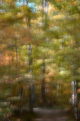 Photograph - Autumn Woods by Minartesia