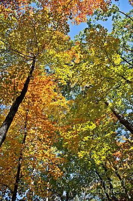 Garden Fruits - Autumn Woods Sky View by Cheryl Baxter