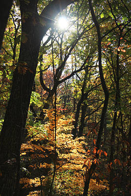 Photograph - Autumn Woods With Sunlight by Melinda Fawver