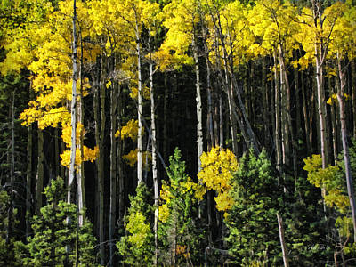 Photograph - Autumn Yellow Aspen by Ann Powell