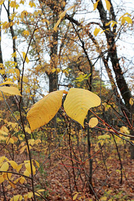 Photograph - Autumn Yellow II by Mary Haber