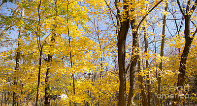 Photograph - Autumn Yellow by Rima Biswas