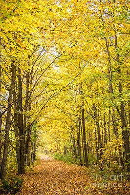 Photograph - Autumn Yellow Trail by Cheryl Baxter