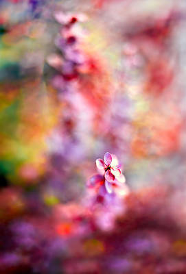 Photograph - Autumnal Berberis 2 by Tomasz Dziubinski