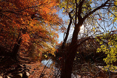 Reds Of Autumn Photograph - Autumnal Break by Lourry Legarde