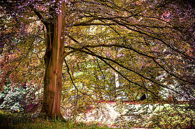 Autumnal Colors In The Summer Time. De Haar Castle Park Art Print by Jenny Rainbow