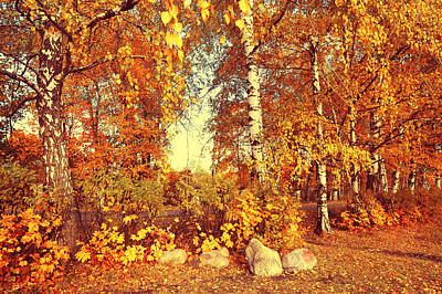 Photograph - Autumnal Display by Jenny Rainbow